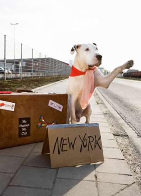 travelingdog