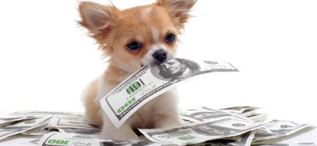 dog-money_628x290