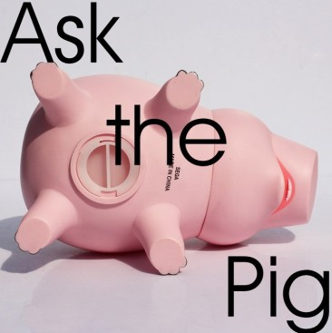 ask the pig with text