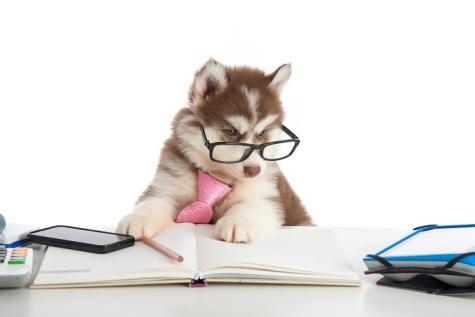 doggy finances