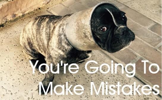 dog mistake